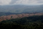 Deforestation for oil palm -- sabah_1231