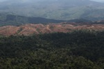 Deforestation for oil palm -- sabah_1233