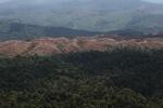 Deforestation for oil palm -- sabah_1233