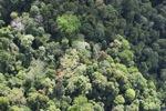 Borneo rainforest -- sabah_1234