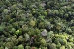 Borneo rainforest -- sabah_1235