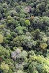 Borneo rainforest -- sabah_1237