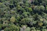 Borneo rainforest -- sabah_1238