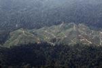 Deforestation for oil palm -- sabah_1239