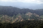 Deforestation for oil palm -- sabah_1242