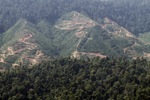Deforestation for oil palm -- sabah_1243