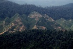 Deforestation for oil palm -- sabah_1248