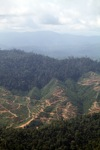 Deforestation for oil palm -- sabah_1249