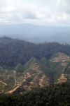 Deforestation for oil palm -- sabah_1251