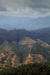 Deforestation for oil palm -- sabah_1253