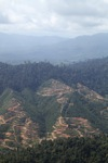 Deforestation for oil palm -- sabah_1254