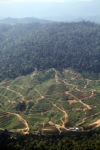 Deforestation for oil palm -- sabah_1255