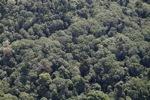 Borneo rainforest -- sabah_1256