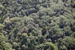 Borneo rainforest -- sabah_1257