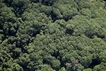 Borneo rainforest -- sabah_1258