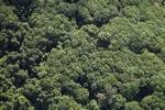 Borneo rainforest -- sabah_1259