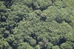 Borneo rainforest -- sabah_1260