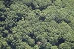 Borneo rainforest -- sabah_1261