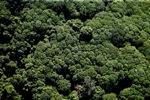 Borneo rainforest -- sabah_1262