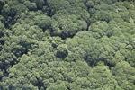 Borneo rainforest -- sabah_1264