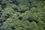 Borneo rainforest -- sabah_1265