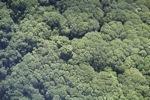 Borneo rainforest -- sabah_1266