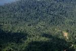 Logged-over forest -- sabah_1273