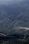 Oil palm plantation -- sabah_1284