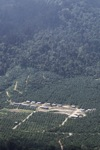 Oil palm plantation -- sabah_1285