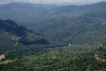 Oil palm plantation -- sabah_1288