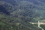 Oil palm plantation -- sabah_1293
