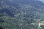 Oil palm plantation -- sabah_1294