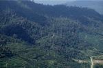 Oil palm plantation -- sabah_1295