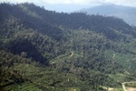 Oil palm plantation -- sabah_1297