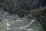 Oil palm plantation -- sabah_1298