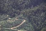Oil palm plantation -- sabah_1299