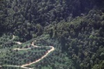 Oil palm plantation -- sabah_1300