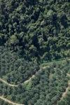 Oil palm plantation -- sabah_1301
