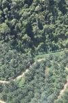 Oil palm plantation -- sabah_1303
