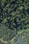 Oil palm plantation -- sabah_1305