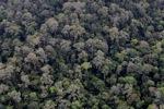 Virgin rain forest -- sabah_1309
