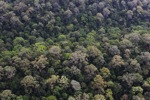 Virgin rain forest in Malaysia