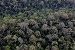 Virgin rainforest in Sabah, Malaysia