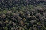 Virgin rain forest in Sabah, Malaysia