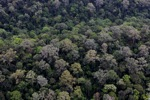 Untouched rainforest in Borneo