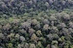 Untouched rain forest