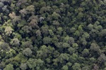 Pristine rainforest in Borneo
