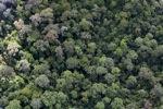 Pristine rain forest