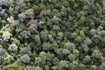 Pristine rainforest in Malaysia