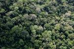 Pristine rain forest in Malaysia